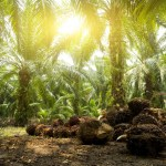 Malaysia Palm oil plantation