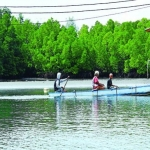 mangrovenursery.